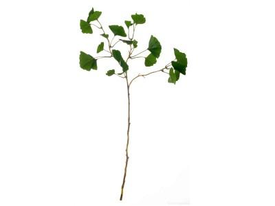 Asa - Gerviblóm Musteristré 72cm