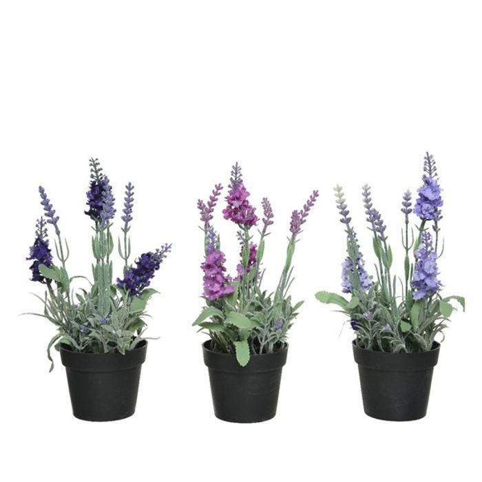Decoris-Lavander Pottablóm 25cm3teg(24)