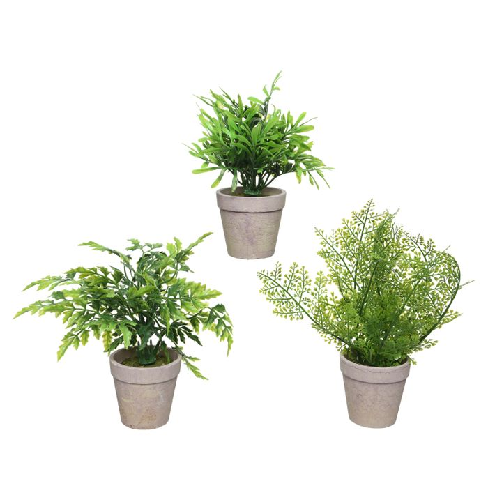 Decoris-Pottaplanta 19cm.3-teg Disp-24