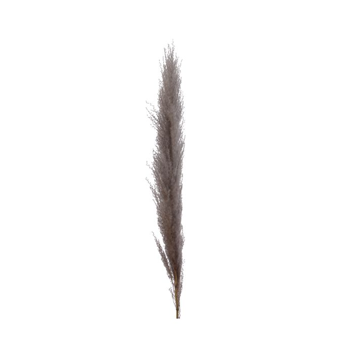 Decoris-Natural Plume Strá 55cm.  (24)