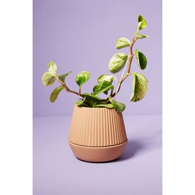 Umbra Earthen Pleated Planter
