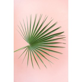 David + David Studio - Palm on Pink 30 x 40