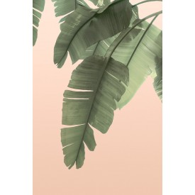 David + David Studio - Tropical Banana Leaves 30 x 40