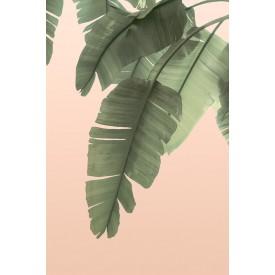 David + David Studio - Tropical Banana Leaves 30 x 40
