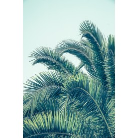 David + David Studio - Seaside Palm 50 x 70