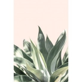 David + David Studio - Light Pink Aloe 30 x 40