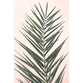 David + David Studio - Light Pink Palm Leaf 30 x 40