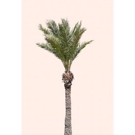 David + David Studio - Light Pink Palm Tree 50 x 70