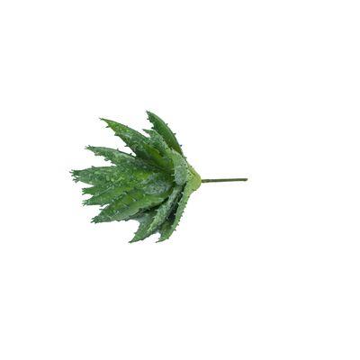 Speedtsberg - Planta gerfi Aloe vera með stöng 15cm