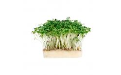 Grow Garden Cress pod áfylling
