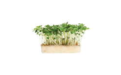 Grow Rucola Cress pod áfylling