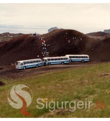 Ferðaþjónusta Vestmannaeyja.