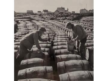 Closing herring barrels in Iceland, 1950.