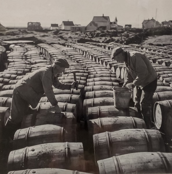Gengið frá síldartunnum í Grindavík, 1950. Ljósmynd á kartoni.